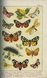 Бабочки Европы. Описание наиболее известных видов и руководство к собиранию и определению бабочек и их гусениц.