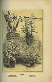 Комнатное садоводство. Уход за комнатными растениями, их выбор и размножение. Приспособление комнат для культуры в них растений.