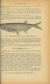 Рыбы пресных вод России и сопредельных стран