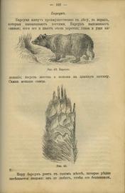 Конволют. Охота на зверя, лесную, водяную и болотную дичь