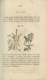 Русский народный лечебный травник и цветник