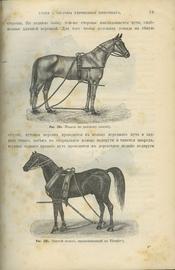 Руководство к хирургической терапии домашних животных. В 2-х томах.