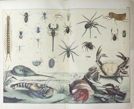 Естественная история земноводных, рыб, черепокожных, слизняков, насекомых, червей и лучистых животных в изображениях