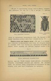 Уход за пасекою. Календарь пчеловода