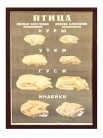 Плакат «Министерство торговли ссср птица» (первая вторая категория)
