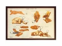 Плакат «Разделка бараньей туши»