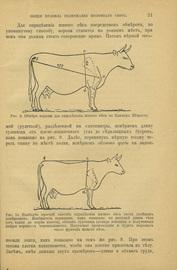 Датский способ кормления молочного скота