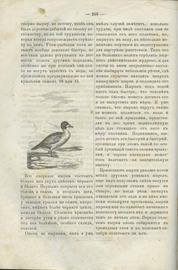 Словарь ружейной охоты