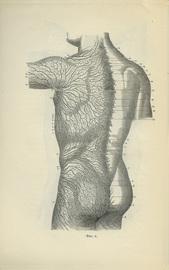Основы массажа