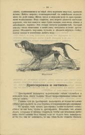 Охота с ружьем и собакой для начинающих охотиться