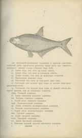 Рыбы России. Жизнь и ловля (уженье) наших пресноводных рыб. В 2-х томах.
