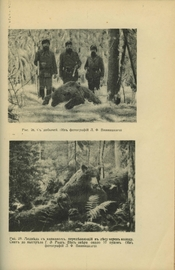 Медведь и охота на него