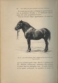 Les races chevalines, avec une etude speciale sur les chevaux russes