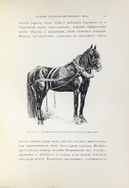 Лошади (конские породы)