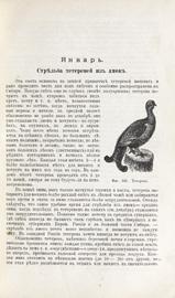 Охотничий календарь. Справочная книга ружейных и псовых охотников: С 480 рис. в тексте