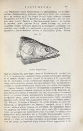 Рыбы России. Жизнь и ловля (уженье) наших пресноводных рыб