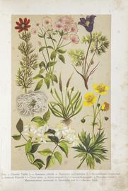 Ботанический атлас. Описание и изображение растений русской флоры. С 88 таблицами в красках, изображающими 501 растение, и с 813 политипажами