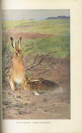Животный мир, его быт и среда. В 3-х томах