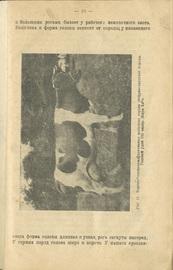 Краткое руководство по разведению молочного скота