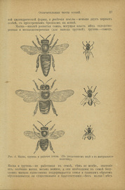 Пчела и пчеловодство. Полный курс пчеловодства для начинающих пчеловодов