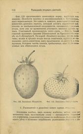 Русский огород: Питомник и плодовый сад. Руководство к наивыгоднейшему устройству и ведению огородного и садового хозяйств