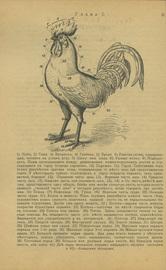 Доходное птицеводство в мелких хозяйствах. С 34-мя рисунками в тексте