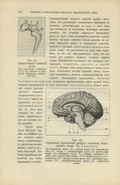 Здоровье, его сохранение, расстройство и восстановление. Настольная книга для семьи. В 2-х томах (4-х полутомах)